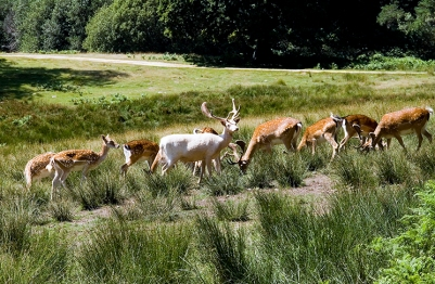 My Girls New Forest