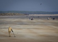 Beach People, St Andrews