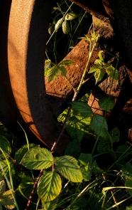 Bramble shoot and rusty wheel