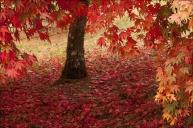 25 swirling leaves