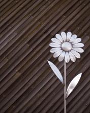 44 - Daisy Daisy Colour