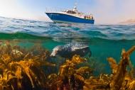 61 seal boat2