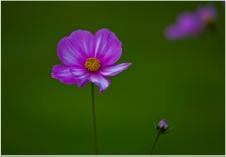 2.Single Flower