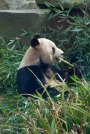 bill's-zoo-2014_0100