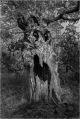 54, Scary Tree, Steven Beard