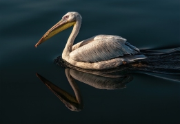 26, Pelican Reflection, George Todd
